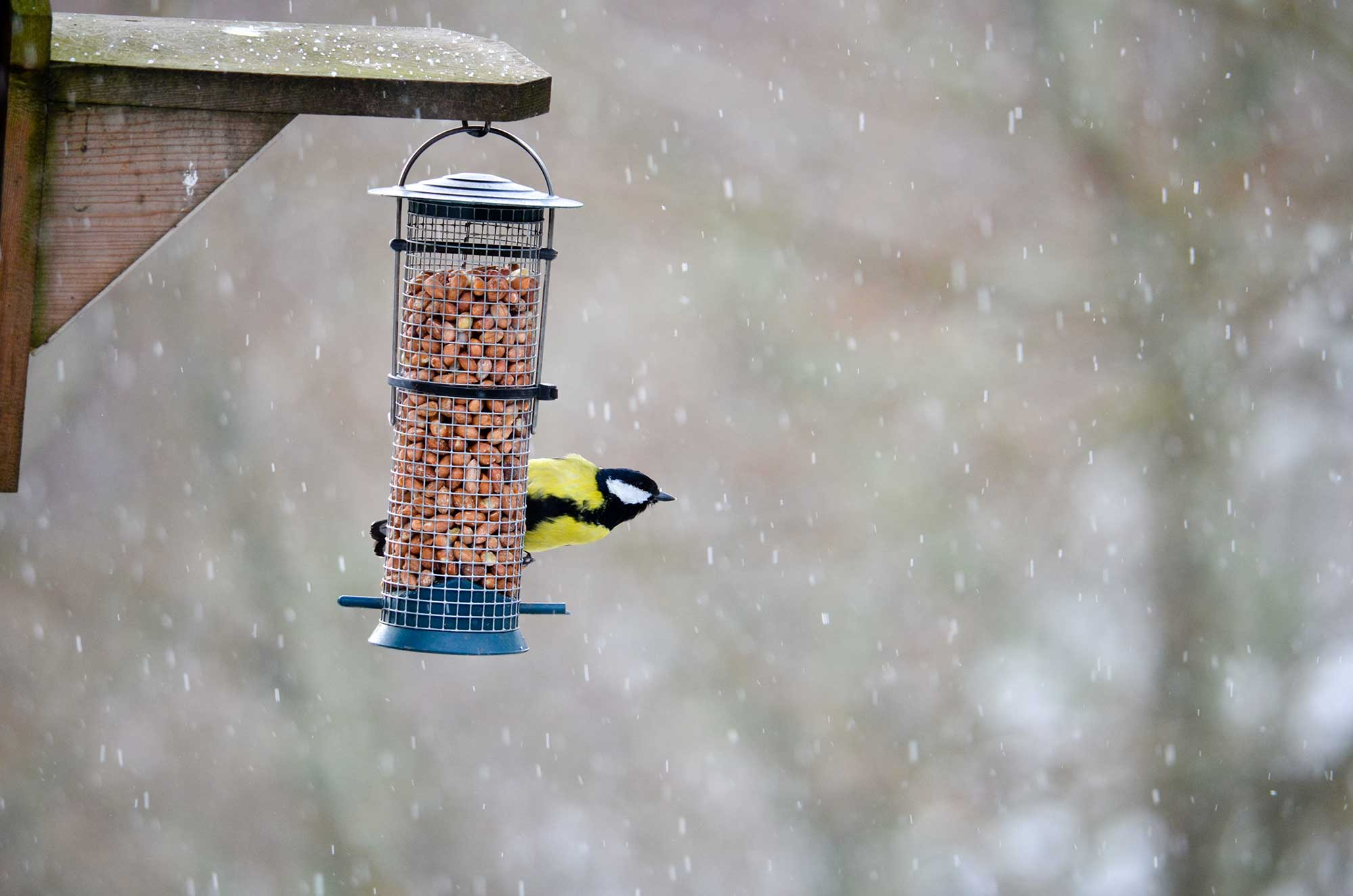 National Bird-Feeding Month