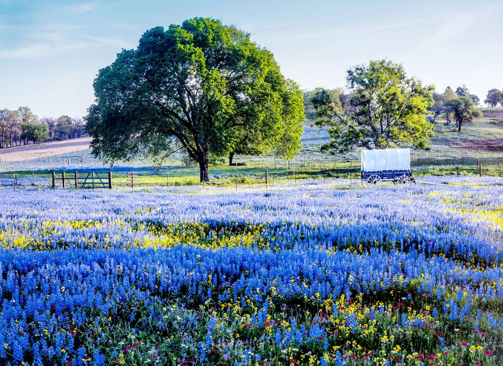 where-to-view-bluebonnets-in-houston-and-throughout-texas